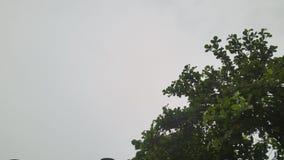 Дерево и небо Стоковое Изображение RF