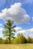 Дерево и облако Стоковое Изображение RF