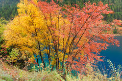 Дерево и озеро осени стоковое изображение
