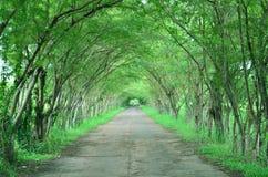 Дерево и дорога Стоковое Изображение RF