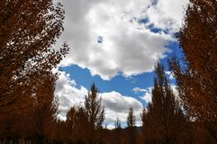 Дерево и дорога Стоковая Фотография RF