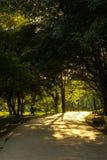 Дерево и дорога Стоковое фото RF