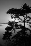 Дерево и пирофакел Солнця Стоковые Изображения RF