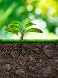 Дерево и почва с травой Стоковые Фотографии RF