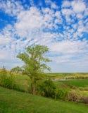 Дерево и поле на солнечный летний день Национальный парк Voroninsky, область Тамбова, Россия Стоковое Фото