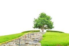 Дерево и поле травы с каменной лестницей водят до дерева для концепции успеха изолированного на белой предпосылке с clippin Стоковые Фотографии RF