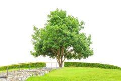 Дерево и поле травы с каменной лестницей водят до дерева для концепции успеха изолированного на белой предпосылке с clippin Стоковые Изображения RF