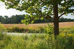 Дерево и пруд клена на прерии Стоковая Фотография RF