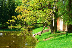 Дерево и пруд стоковая фотография