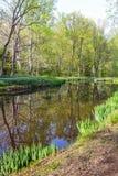 Дерево и пруд Стоковые Изображения