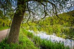 Дерево и пруд Grenadier, на высоком парке, в Торонто, Онтарио Стоковое фото RF