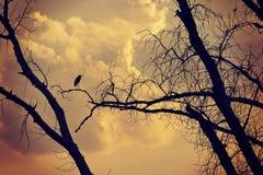 Дерево и птицы на заходе солнца Стоковые Изображения RF