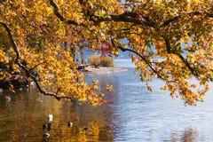 Дерево и птицы осени на береге озера Лугано, Швейцарии Стоковая Фотография RF
