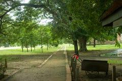 Дерево и свет в лесе Стоковые Изображения RF