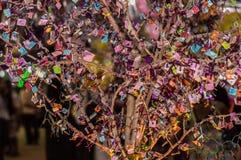 Дерево и связывает Стоковая Фотография