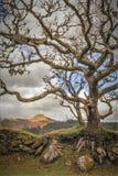 Дерево и скалистые вершины Стоковые Фотографии RF