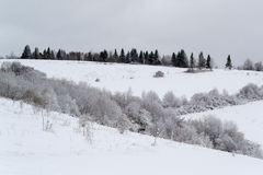 Дерево и снег Стоковое фото RF
