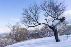 Дерево и снежок Стоковая Фотография RF