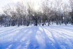 Дерево и снежок Стоковое фото RF