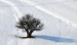 Дерево и снежок Стоковое Фото