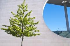 Дерево и современная архитектура Стоковое Фото