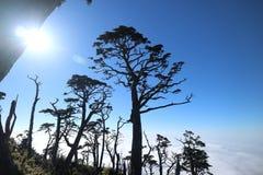 Дерево и солнечный свет, небо стоковая фотография rf