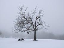 Дерево и стенд в зиме стоковые фотографии rf