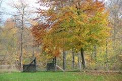 Дерево и строб в красивых colurs осени Стоковое Изображение