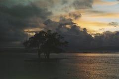 Дерево и сумрак Стоковое Изображение