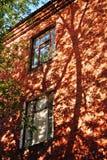 Дерево и тень дерева Стоковая Фотография