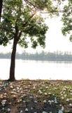 Дерево и тень Солнця Стоковое Фото