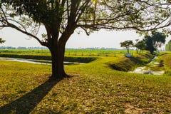 Дерево и тень Стоковое Фото