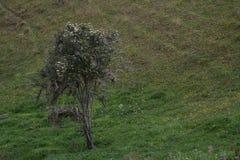 Дерево и трава стоковое фото rf