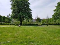 Дерево и трава Стоковое Изображение RF