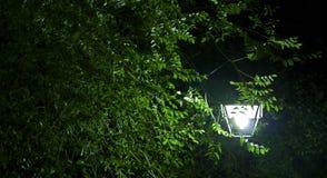 Дерево и уличный свет стоковое изображение rf