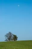 Дерево и луна Стоковое Изображение RF