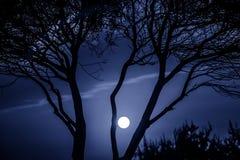 Дерево и лунный свет Стоковые Фото