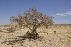 Дерево и утесы Стоковые Изображения RF