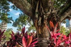 Дерево и цветки на китайском виске Nanputuo виска стоковые фотографии rf