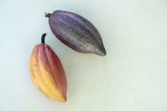 Дерево какао, какао Theobroma Стоковая Фотография
