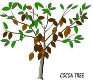 Дерево какао с зрелыми плодоовощами Стоковые Фото