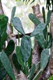Дерево кактуса на лете Стоковое фото RF