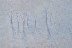 Дерево как формы естественно созданные в воде песка морским путем на песчаном пляже - абстрактные картина и текстура стоковая фотография
