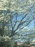 Дерево кизила Стоковые Изображения RF