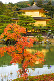 Дерево клена на виске Kinkakuji Стоковое Изображение