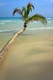 Дерево кокоса на тропическом пляже Стоковые Фото