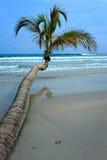 Дерево кокоса на тропическом пляже Стоковые Изображения