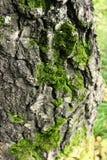 Дерево конца-Вверх стоковое фото
