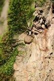 Дерево конца-Вверх стоковые изображения rf
