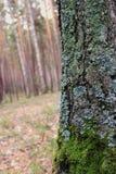 Дерево конца-Вверх стоковое изображение rf